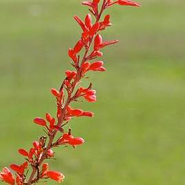 Kristina Deane - Cactus Flower Bloom