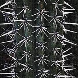 Tom Janca - Cactus Spines