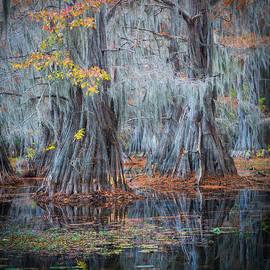Inge Johnsson - Caddo Lake Fall