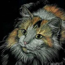 Silas Newman - Calico Kitten