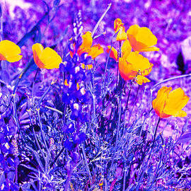 Tamara Kulish - California Poppies and purple 2-1-9