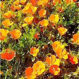 Janet Rae-Dupree - California Poppies