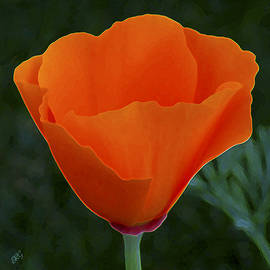 Ben and Raisa Gertsberg - California Poppy Spectacular