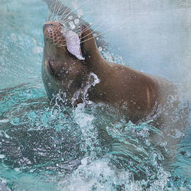 TN Fairey - California Sea Lion - Houston Zoo