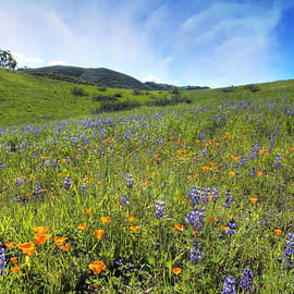 Lynn Bauer - California Spring Wildflowers
