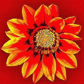 Bob and Nadine Johnston - California Wildflowers