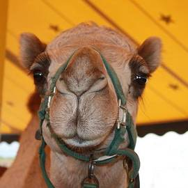 John Telfer - Camel Headshot