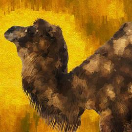 Jack Zulli - Camel In Desert Sun