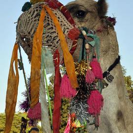 Bliss Of Art - Camel in Indian Fair