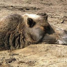 Ausra Huntington nee Paulauskaite - Camel Nap