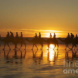 Madeline Saunders - Camels on Cable Beach