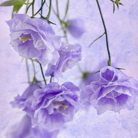 Sandra Foster - Campanella Blossoms Suspended - Macro
