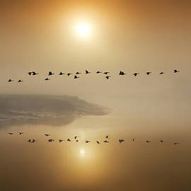 Adrian Campfield - Canada Geese