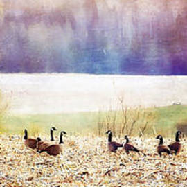Christine Belanger - Canada Geese