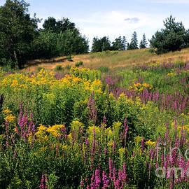 Chris Scroggins - Canada Wildflower Meadow