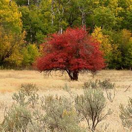 Kathy Bassett - Canadian Autumn