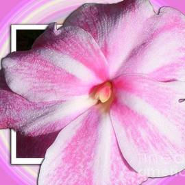 Barbara Griffin - Candy Cane Flower
