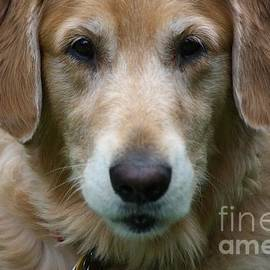 Veronica Batterson - Canine Close Up