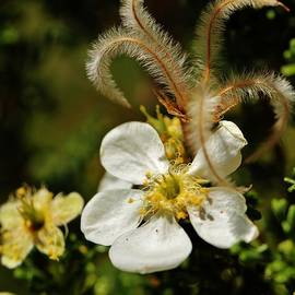 Sarah Pemberton - Canyon Flower