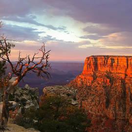 Heidi Smith - Canyon Rim Tree