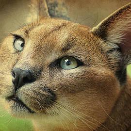 Steve McKinzie - Caracal Lynx Art