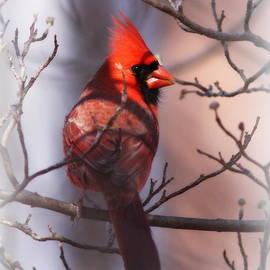 Travis Truelove - Cardinal - 3686-032