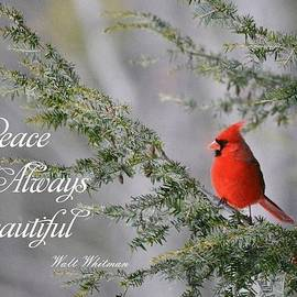 Judy Genovese - Cardinal in the Pines with Whitman quote