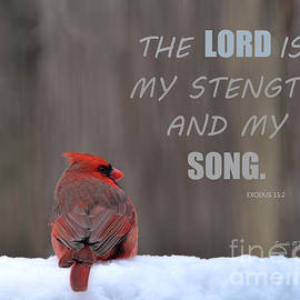 Sandi OReilly - Cardinal In The Snowstorm With Scripture