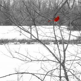 Robert Storost - Cardinal in Winter