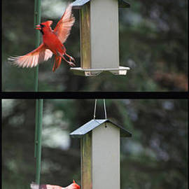 Thomas Woolworth - Cardinal Landing 4 Panel Vertical Bird Feeder