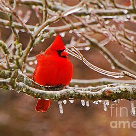Mary Carol Story - Cardinal