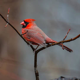 John Haldane - Cardinal Sing