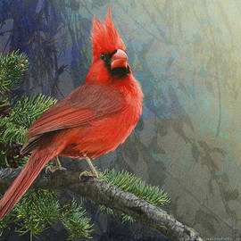 R christopher Vest - Cardinal Study Perched In Forest