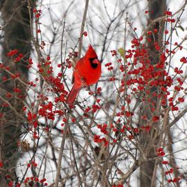 Vonnie Murfin - Cardinal