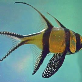 Sandi OReilly - Cardinalfish