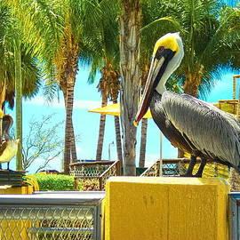 Sandra Pena de Ortiz - Caribbean Brown Pelican