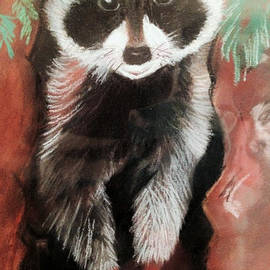 Renee Michelle Wenker - Caricature of a Racoon