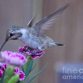 Debby Pueschel - Carnation Landing