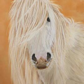 Sarah Dowson - Carneddau Pony
