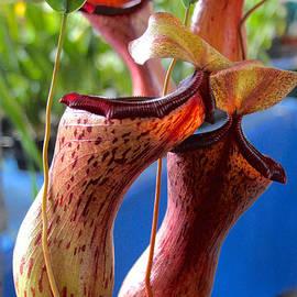 Venetia Featherstone-Witty - Carnivorous Pitcher Plants