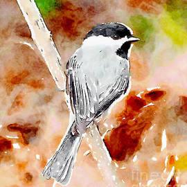 Kerri Farley - Carolina Chickadee Watercolor Art