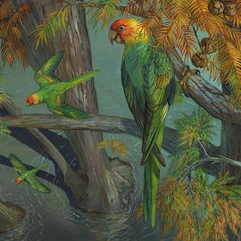Carolina parakeet in a Bald Cypress