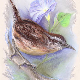 MM Anderson - Carolina Wren with Morning Glory