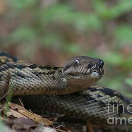 J Cooper - Carpet Snake