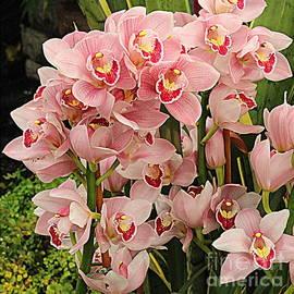 Photographic Art and Design by Dora Sofia Caputo - Cascade of Pink Orchids
