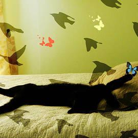 Kathy Barney - Kitty Dreams