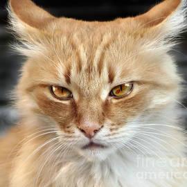 Daliana Pacuraru - Cat face