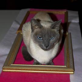 Sally Weigand - Cat Framed