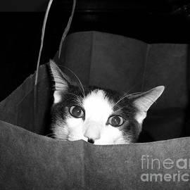 Cynthia Vreeland - Cat In The Bag