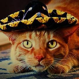 Diana Cardosi-Bussone - Cat in the Black Sombrero